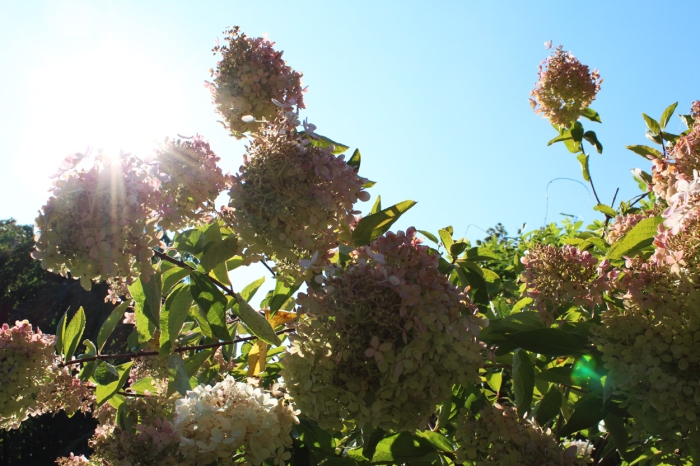 ryan suzie bush