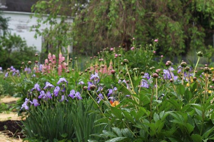flower-garden-3