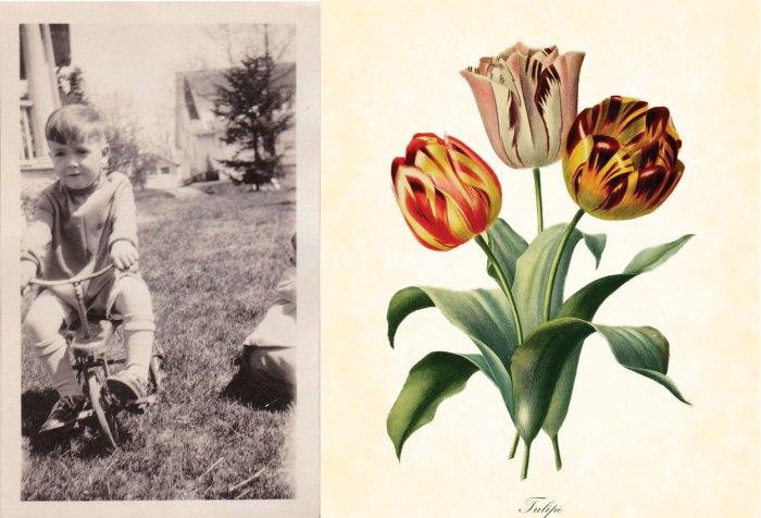 james-l-bike-tulip